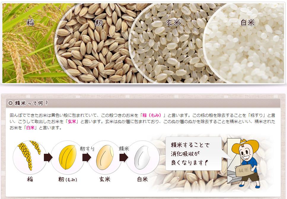 稲の収穫から白米まで
