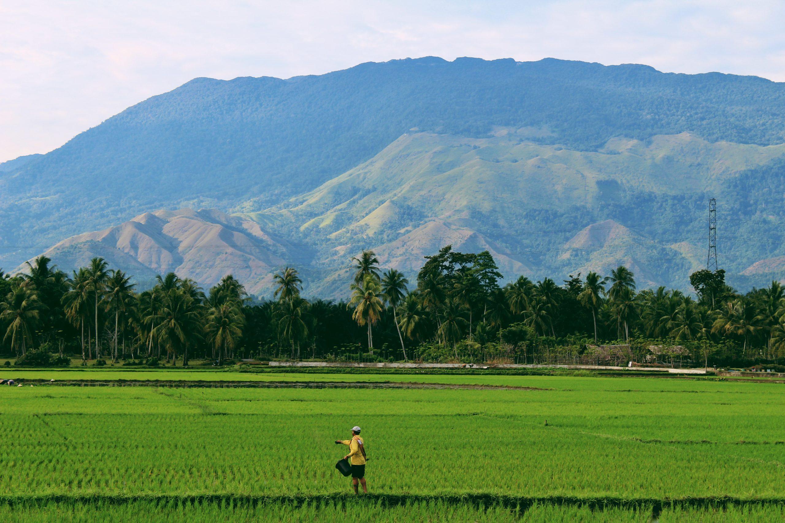 【まとめ】稲の収穫は大変!稲刈りの流れをざっくり解説