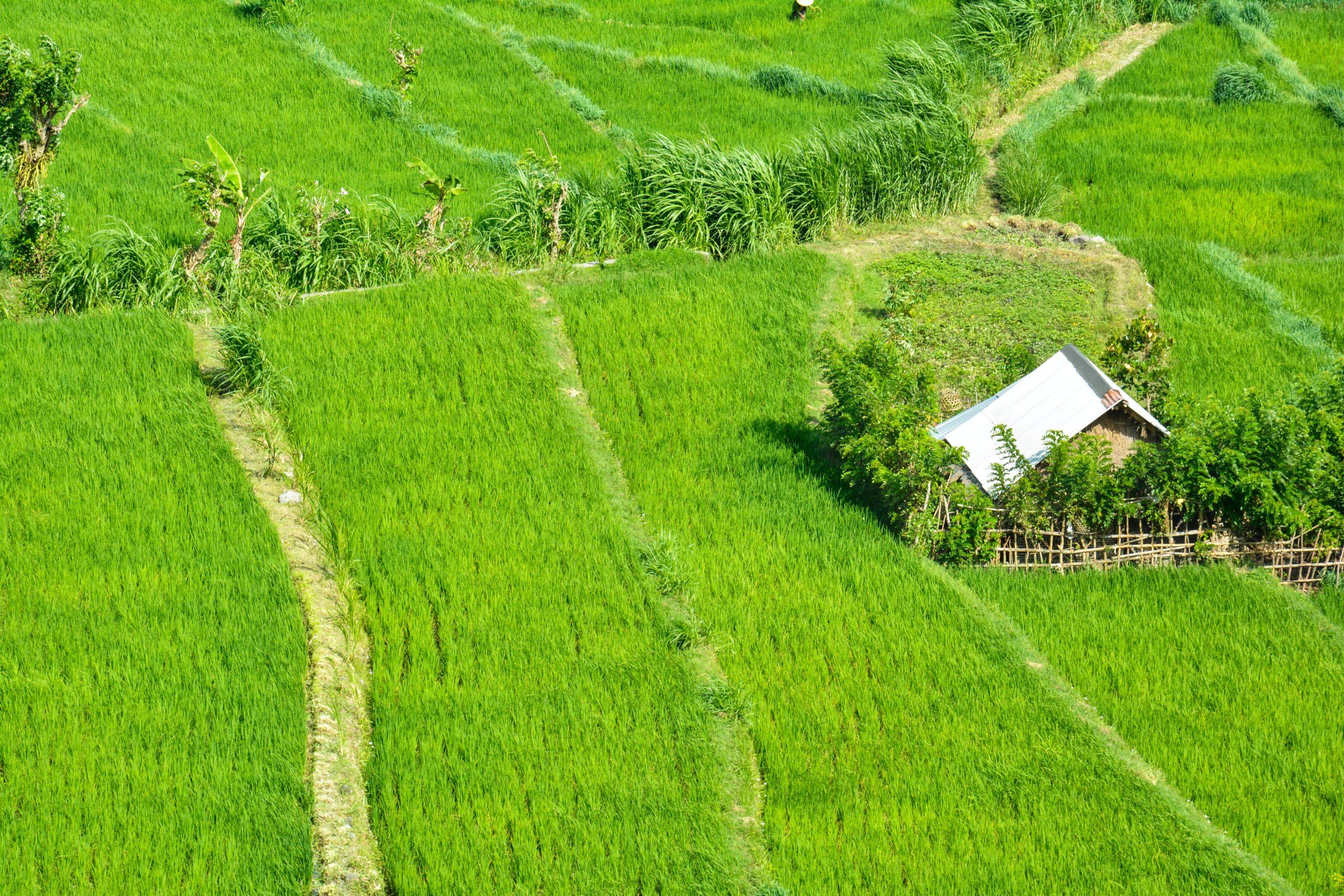 稲の収穫方法②籾摺り編