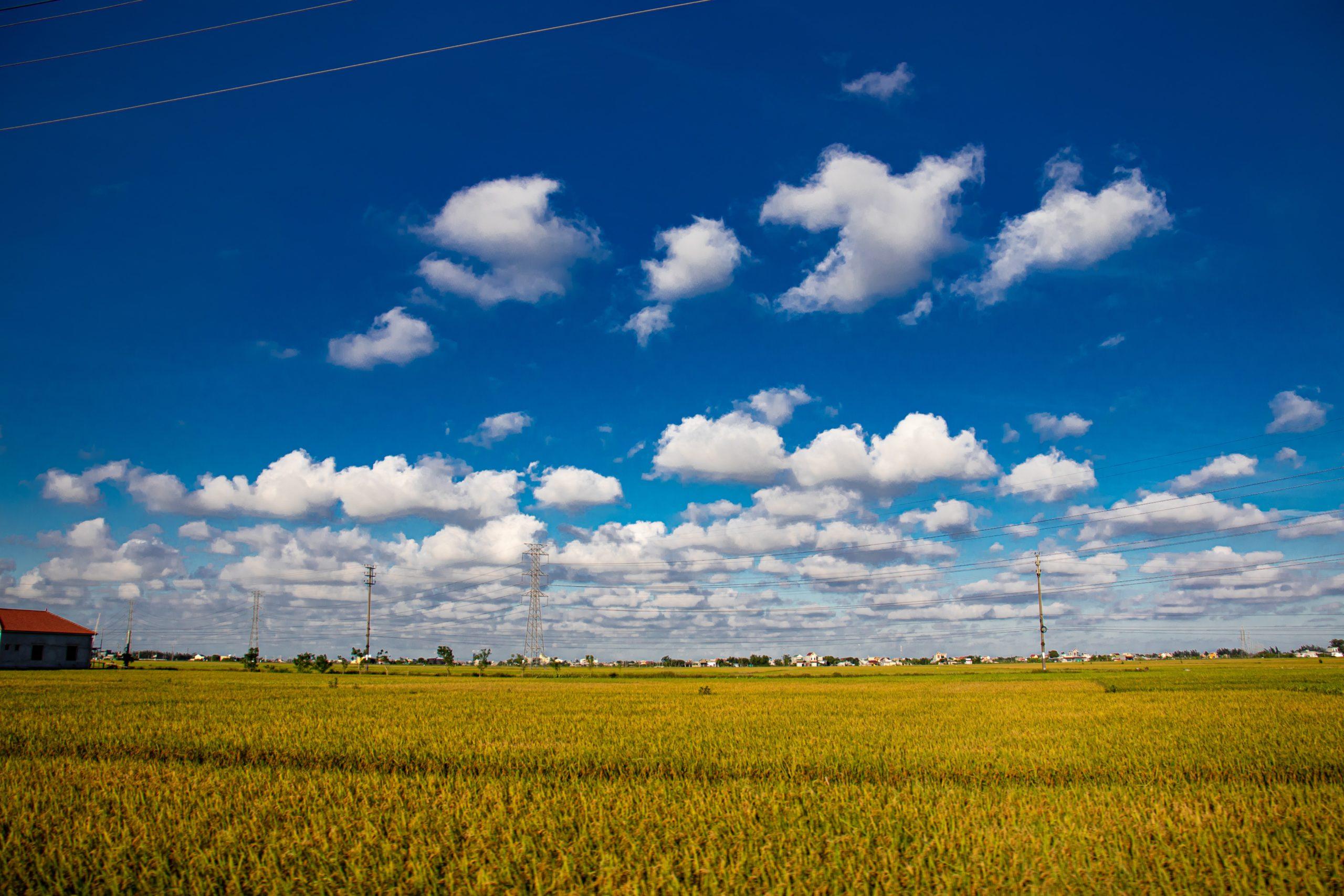 稲の収穫方法①稲刈り編